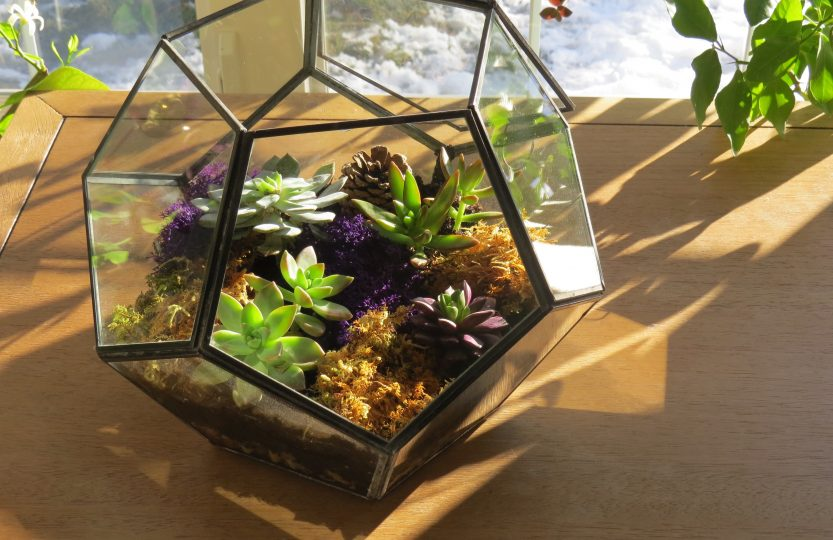 terrarium pour plantes grasses instructions d taill es et. Black Bedroom Furniture Sets. Home Design Ideas