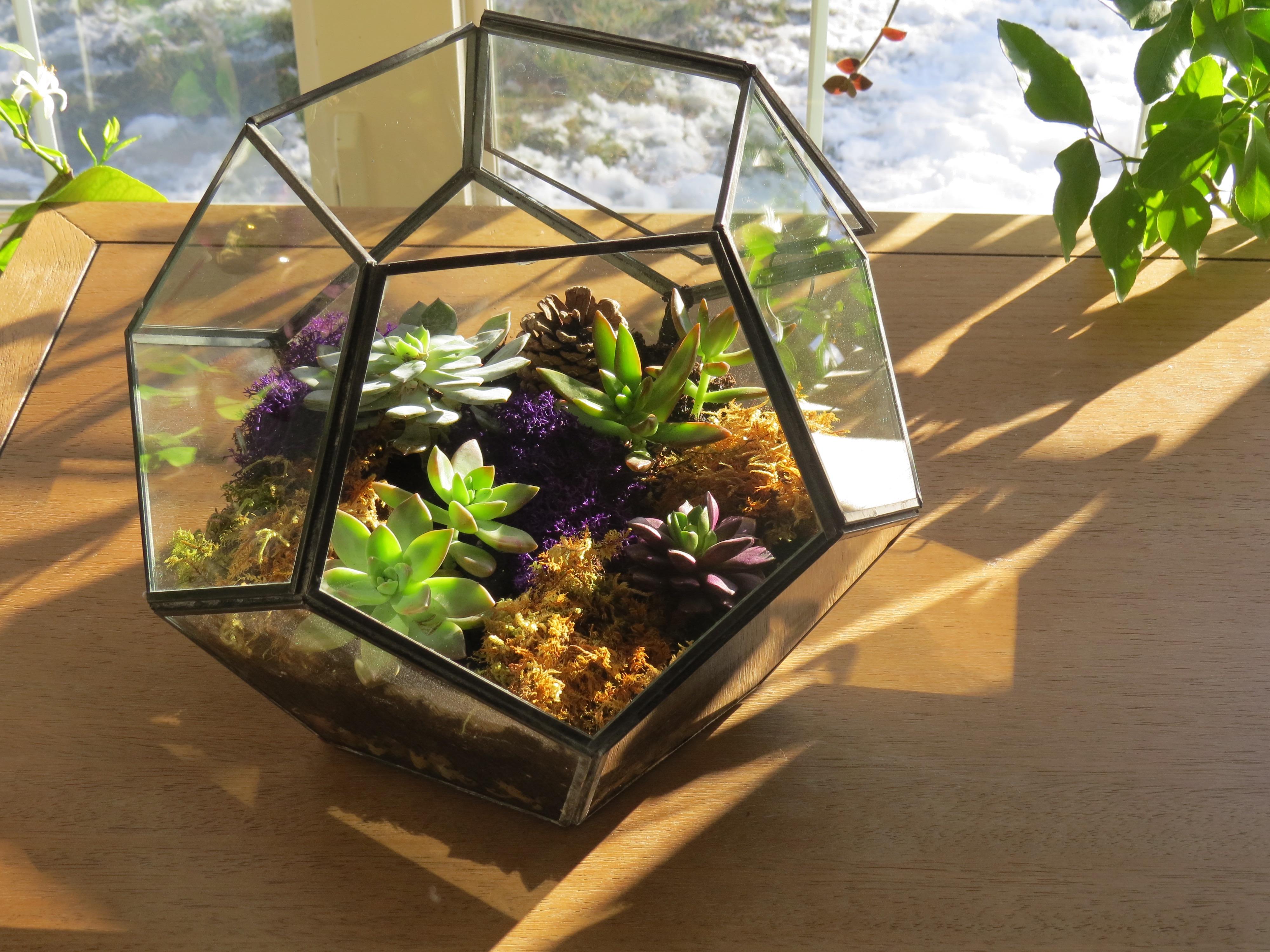 Réalisez un terrarium pour plantes grasses en quelques minutes!